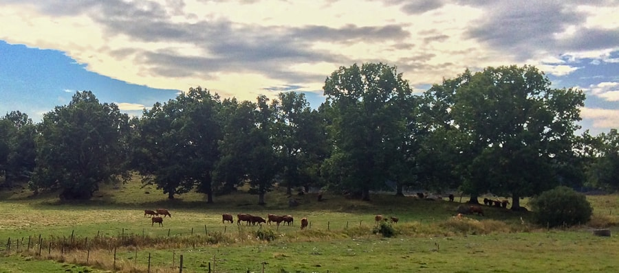 Naturen sköter nu själv de så kallade naturbetesmarkerna och inga djur tvingas längre beta för att hålla dem öppna.
