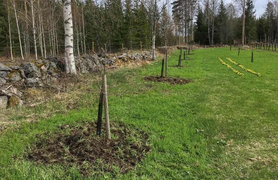 Även mina Åkerö på Mm106 fick en liten plåt uppfräst. När ogräset torkat kommer jag att fråga ner det – regelbunden fräsning är planen.
