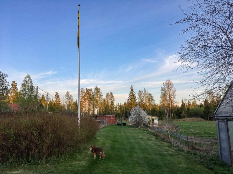 En vindstilla vårkväll. Doften av nyklippt gräs. Koltrasten spelar i skogen och man riktigt känner att det här blir ett bra år.