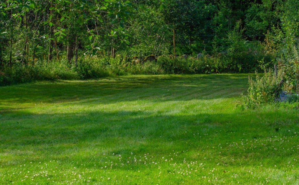 En del tror att en oklippt gräsmatta med långt gräs är bäst vid torka. Men då ökar avdunstningen så det bästa är ett mellanting – varken för kort eller för långt. Mitt gräs vattnas aldrig.