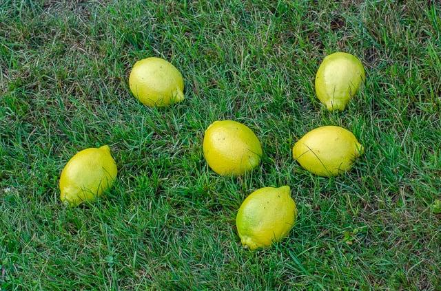 Citroner är en av många råvaror som innehåller citronsyra. Jag hävdar att även citronsyran i rabarber är äkta vara.