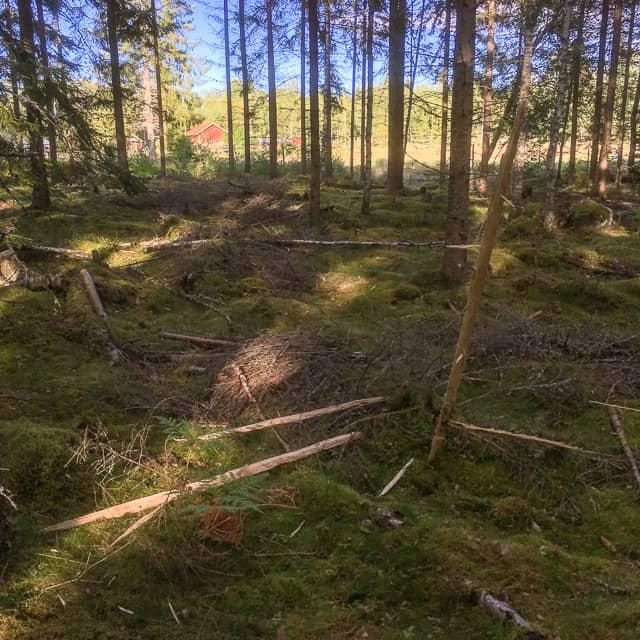 Runt trädet ligger splitter långa som åror och en del av dem har borrat ner sig i marken som spjut. Man får vara glad att man inte stod under det här trädet.