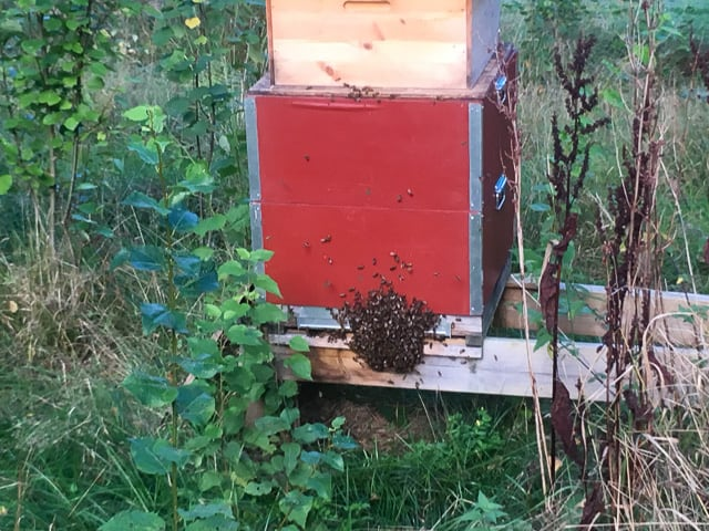 När jag minimerat flusteröppningen blir det trängsel för alla bin som vill in. Men det är att föredra fram för röveri i full skala-