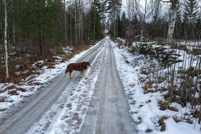 Det finns två skäl till att jag väljer dubbdäck: För det första finns det dagar jag inte skulle kunna ta mig hem utan dem – och på rena isvägar kan de rädda liv om något springer ut framför bilen.