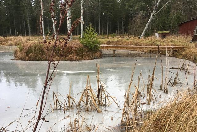 Det är frestande att ge sig ut på isen men då ska man ha isdubbar, har trampat igenom tillräckligt många gånger för att ha respekt även för en trädgårdsdamm.