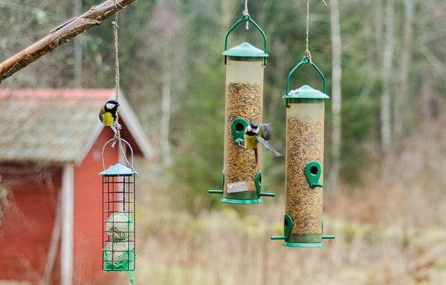 Foderautomat är bättre än fågelbord eftersom fodret inte blandas med träck, då minskar risken för smitta.