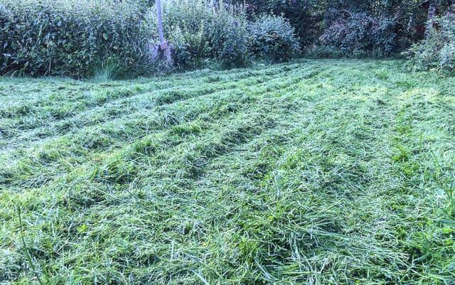 Efter kopplingen ligger det tjocka drivor av gräsklipp. Jag låter dem torka och sen kör jag över dem med mulchern